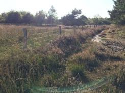 coulissen, bos, zandwegen en heerlijke insectenrijke heideveldene
