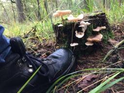 vocht, nattigheid levert in iedergeval prachtige paddenstoeltjes op.