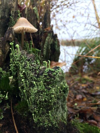 little mushroom village