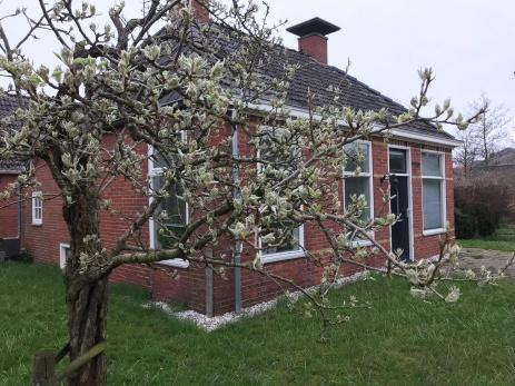 perenboom in de bloei